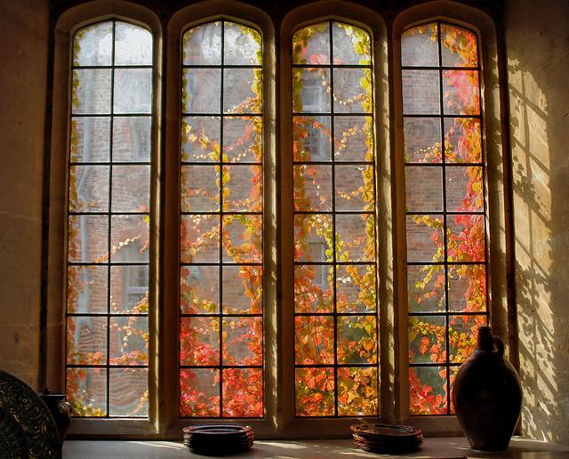 otoño desde la ventana