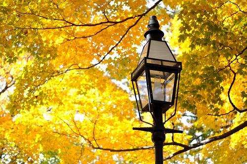 otoño en la ciudad
