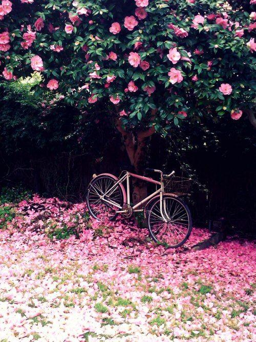 bici en primavera