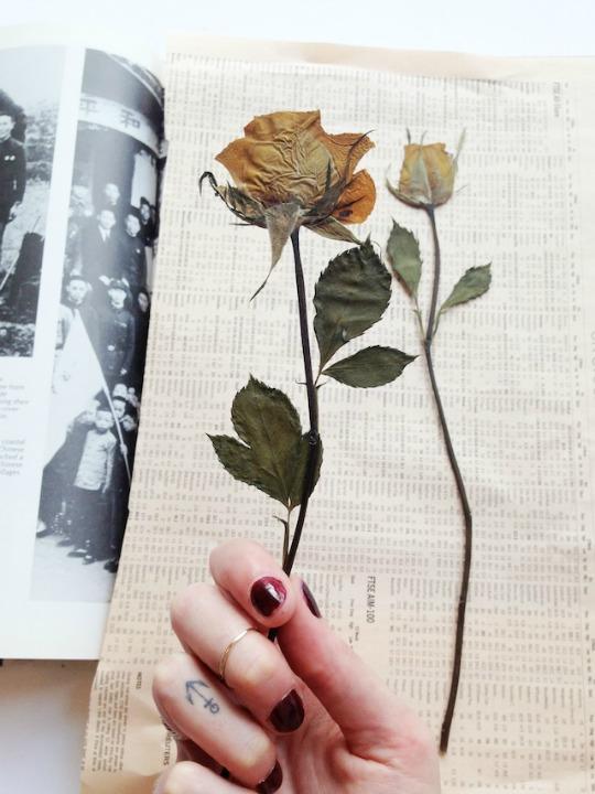 como hacer flores secas