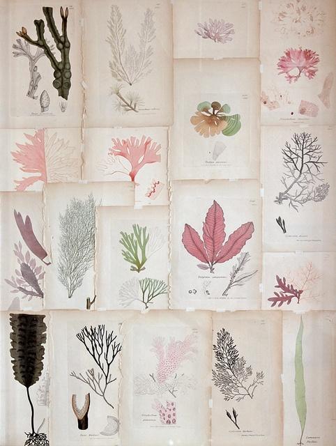 ilustraciones botanicas