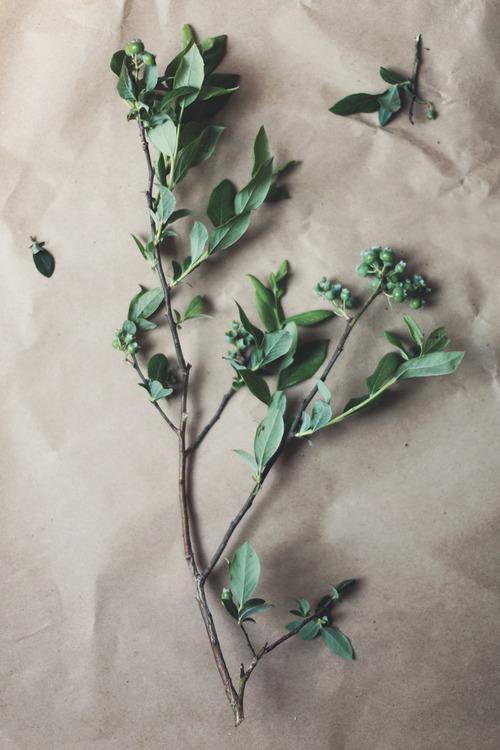 como hacer un herbario