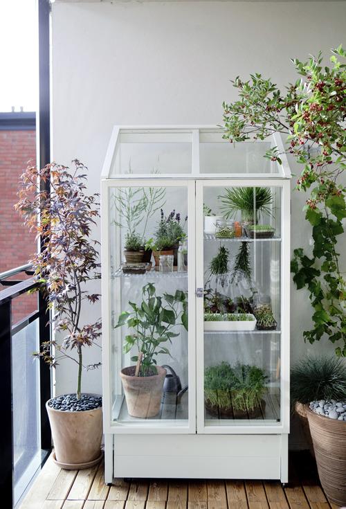 Plantas arom ticas compartimos un brunch - Invernadero en terraza ...
