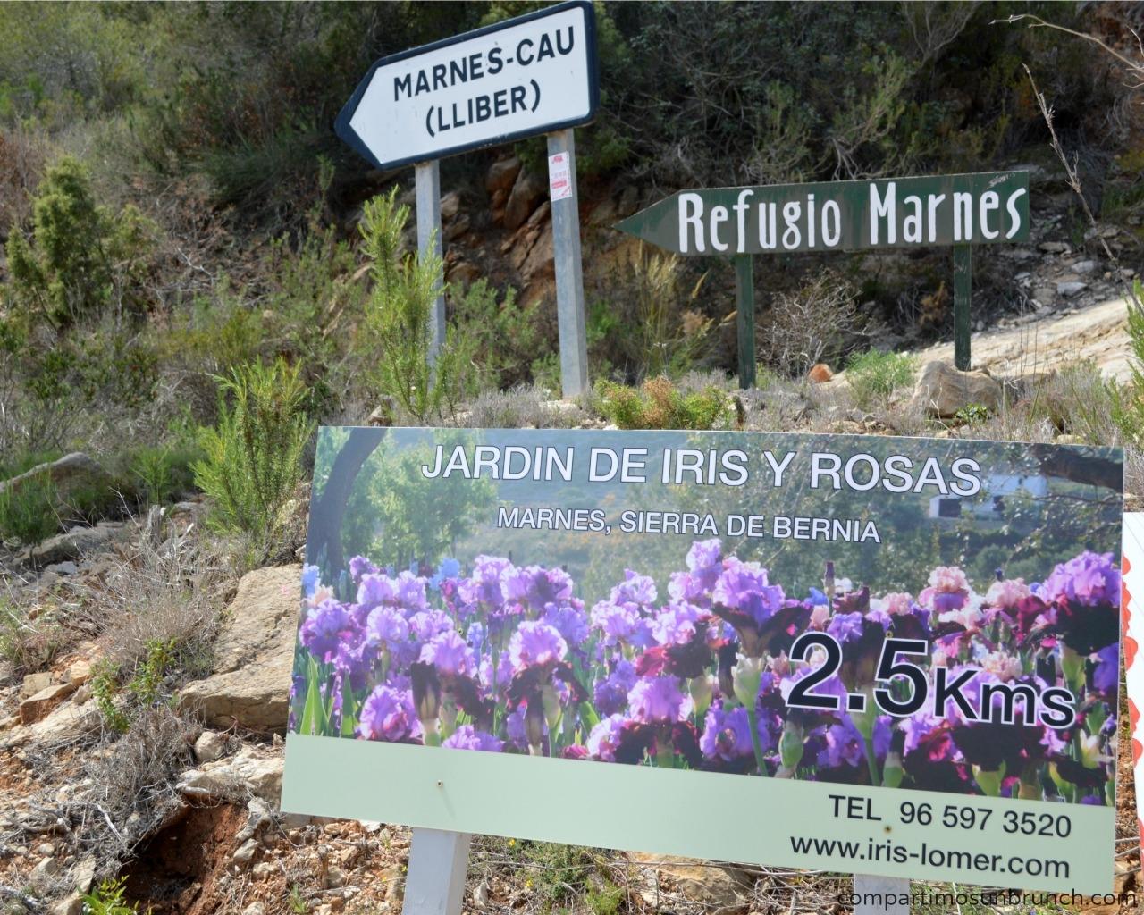 jardin-iris